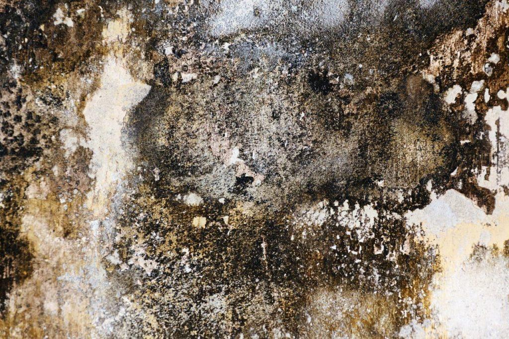 Schimmel an der Kellerwand - nicht immer lassen sich Rückschlüsse von der Farbe zum Schimmelpilz ziehen